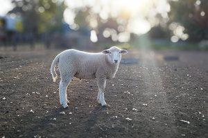迷える子羊たちに贈る「リニューアルの目的」まとめ