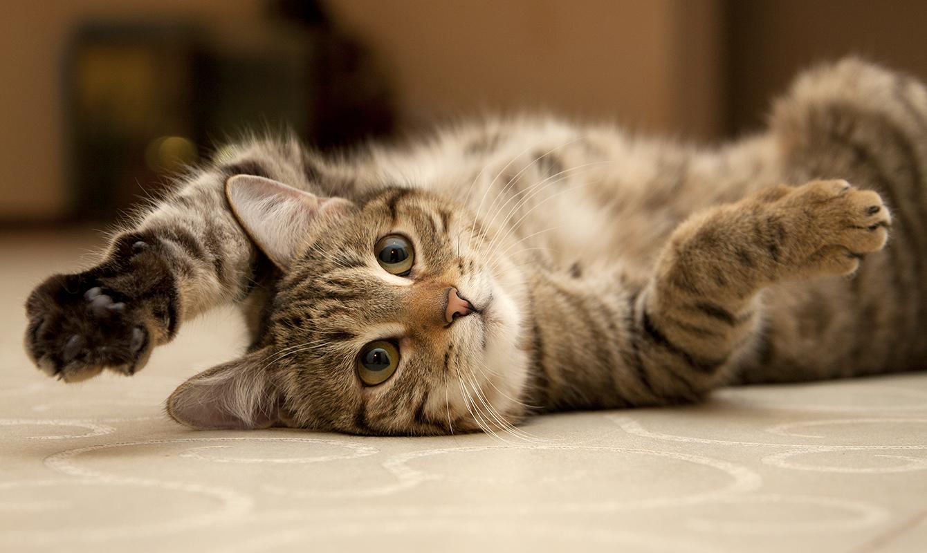 ネコはどこへ行った?:ここから使い倒すGoogle Analytics